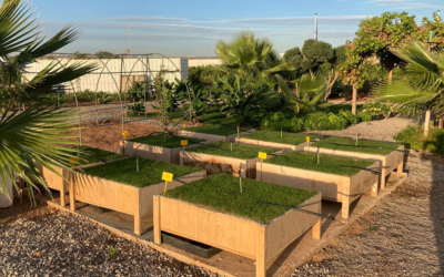 Turf trials – Bermudagrass with Granucote®CRF